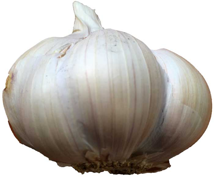 L'ail sativum